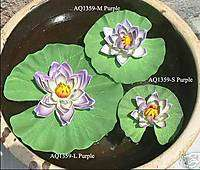 Floating Water Lilies Purple Flowers Pond Lotus Party