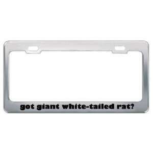 Got Giant White Tailed Rat? Animals Pets Metal License Plate Frame