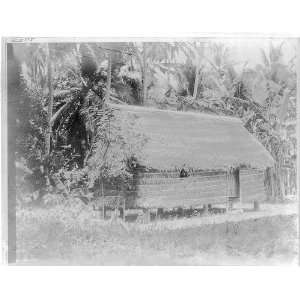 A thatch house on Guam,c1912,Palm trees,Pacific Ocean