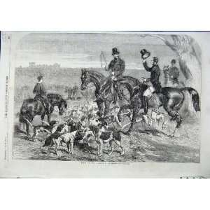 H.R.H Prince Albert Harriers Bloodhounds Hunting 1856