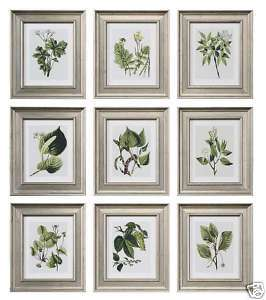 TRADITIONAL S/9 Botanical Green Leaf WALL ART Decor Silver Framed