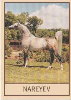 NAREYEV   ARABIAN HORSE COLLECTOR CARD   MULTI CHAMPION