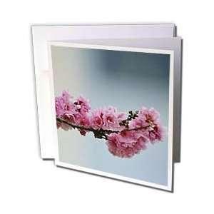 Flowers   Introduction  Flowering in Spring  Pink Flowering Tree